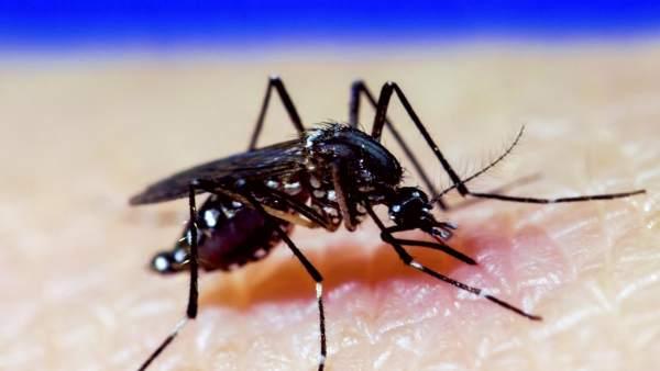 Cientificos Del Csic Desarrollan Una Nueva Vacuna Contra El Virus Del Zika, Planeta Incógnito