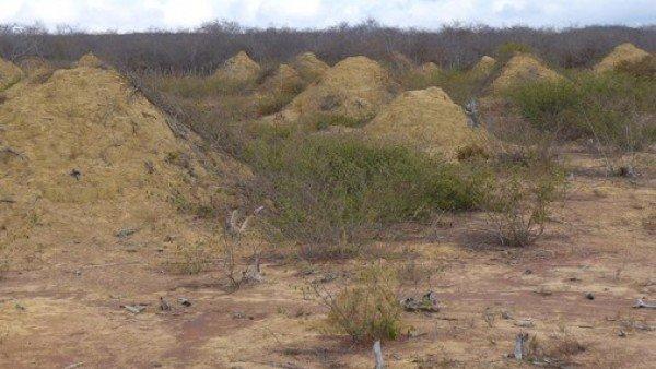 La mayor agrupación de termiteros del mundo se encuentra en Brasil y puede ser vista incluso desde el espacio