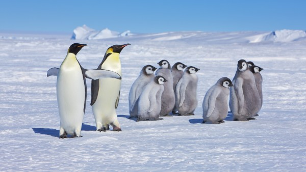 La Fauna Antartica Amenazada Por Patogenos Esparcidos Por Los Humanos, Planeta Incógnito