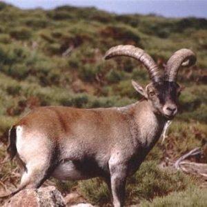 ¿Qué especies ya están extinguidas y cuáles aún forman parte de la biodiversidad de España?