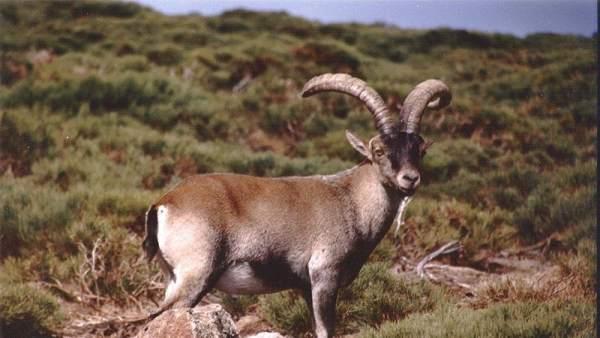Que Especies Ya Estan Extinguidas Y Cuales Aun Forman Parte De La Biodiversidad De Espana, Planeta Incógnito