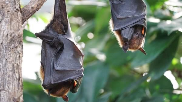 Murciélagos durmiendo