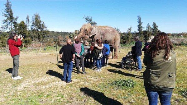 FAADA denuncia las condiciones en las que tienen a la elefanta Dumba: «esquelética, en un trailer sin espacio»