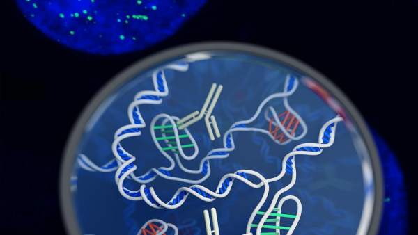 ADN en las células