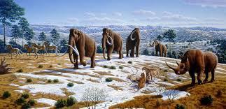 Conoce El Nuevo Estudio Que Relaciona La Extinción Del Rinoceronte Lanudo Con El Cambio Climático De La época 7