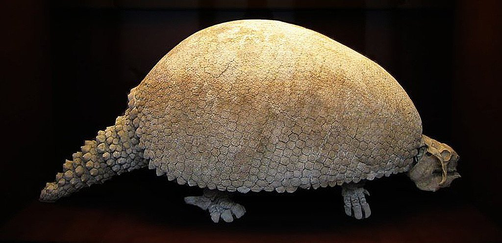 1024px Glyptodon 1, Planeta Incógnito