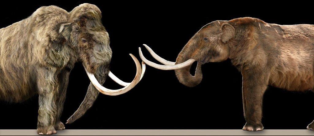 Conoce El Nuevo Estudio Que Relaciona La Extinción Del Rinoceronte Lanudo Con El Cambio Climático De La época 13