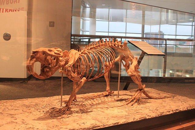 Giant Pleistocene Beaver Castoroides Ohioensis, Planeta Incógnito