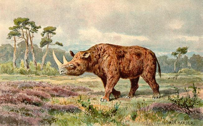 Conoce El Nuevo Estudio Que Relaciona La Extinción Del Rinoceronte Lanudo Con El Cambio Climático De La época 1