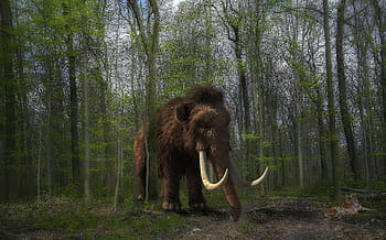 Mammoth Tiger Composing Forest Royalty Free Thumbnail, Planeta Incógnito