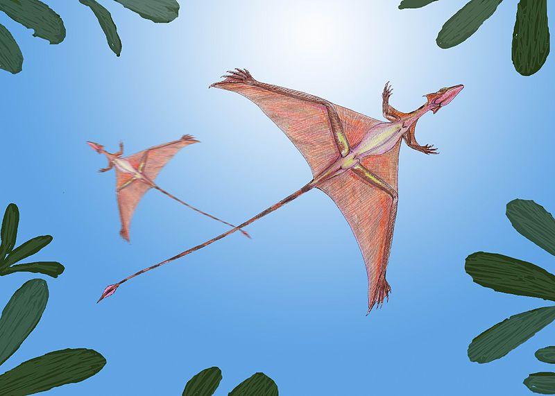 Dmitry Bogdanov - dmitrchel@mail.ru Reconstrucción artística del aspecto en vida del Podopteryx, ahora también denominado Sharovipteryx mirabilis.