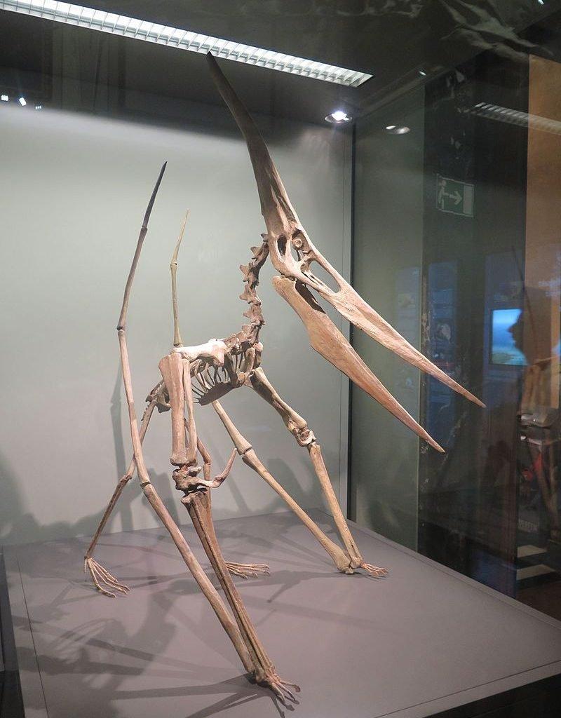régine debatty - https://www.flickr.com/photos/nearnearfuture/28747524441/ Esqueleto de Pteranodon reconstruido en posición cuadrúpeda en Viena